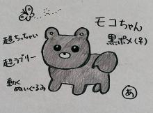 ポメチワMIX まっ黒 ぽーちゃんと一緒-IMAG0196_1.jpg