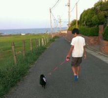 ポメチワMIX まっ黒 ぽーちゃんと一緒-1376570930773.jpg