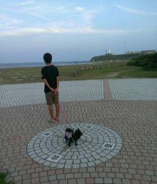 ポメチワMIX まっ黒 ぽーちゃんと一緒-1376647903277.jpg