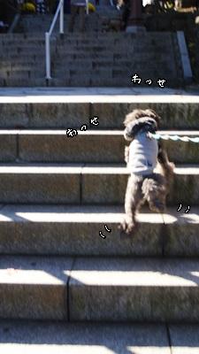 azuki1030e.jpg