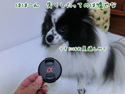 CIMG5934.jpg