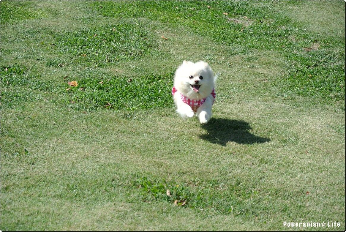 06_まろん飛行犬