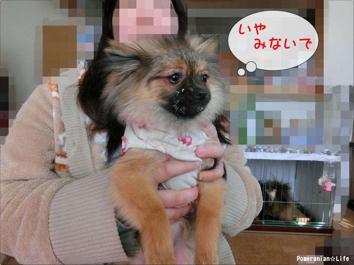 CIMG1803_20130426215132.jpg