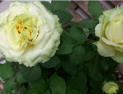お花3-2