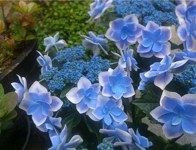 お花3-4