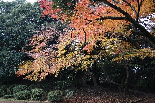 20131125kanazawa4.jpg