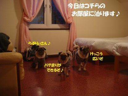 DSC04920_20131129012117d4b.jpg