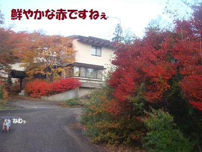 DSC04976_20131201031150dff.jpg
