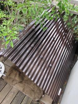 猫小屋屋根修理完了