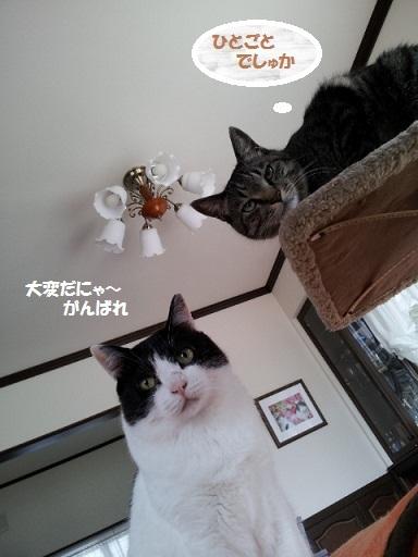 20130328_151038 - コピー