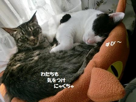 CIMG7368 - コピー