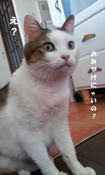 20120719_113104 - コピー