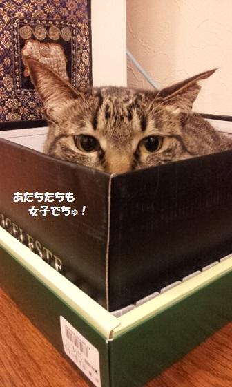20120424_213303 - コピー