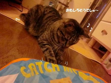 CIMG8369 - コピー