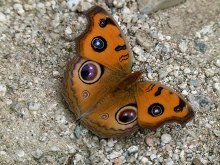 2013.10.15蝶とエナガ 059
