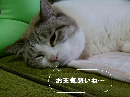 鎧ぞろえ2013.11.10 006
