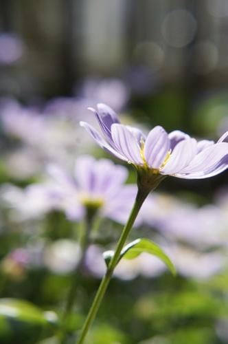 庭の花5.5016