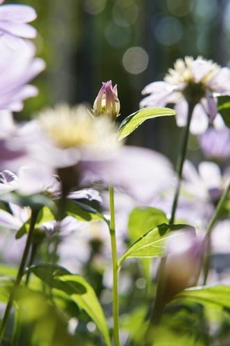 庭の花5.5015