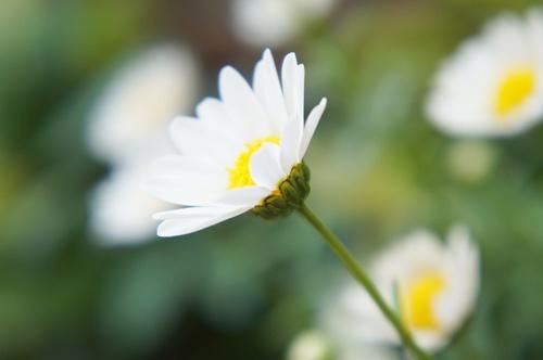 庭の花5.5011