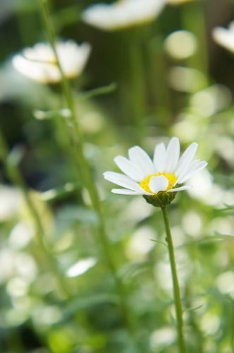 庭の花5.5018