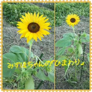 2013-09-18-17-34-17_deco.jpg
