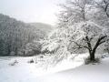 滋賀県朽木村の雪景色