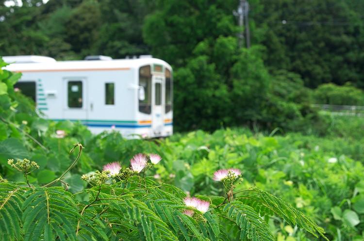 合歓の木が咲く鉄路