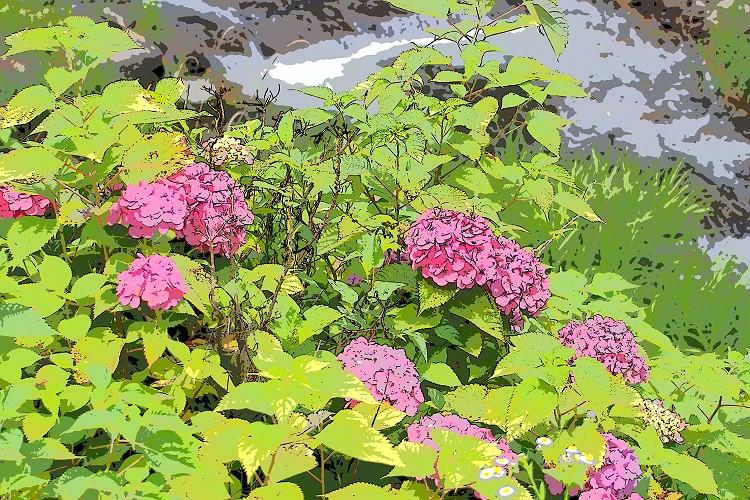 紫陽花が咲く頃 5