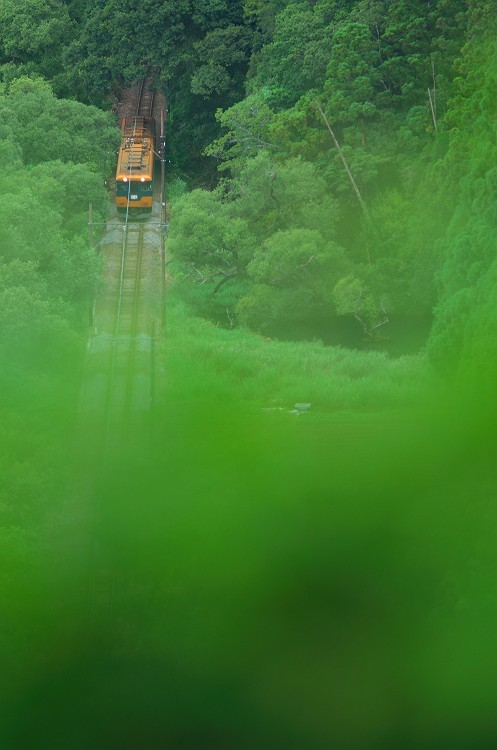 深緑の森を抜けて