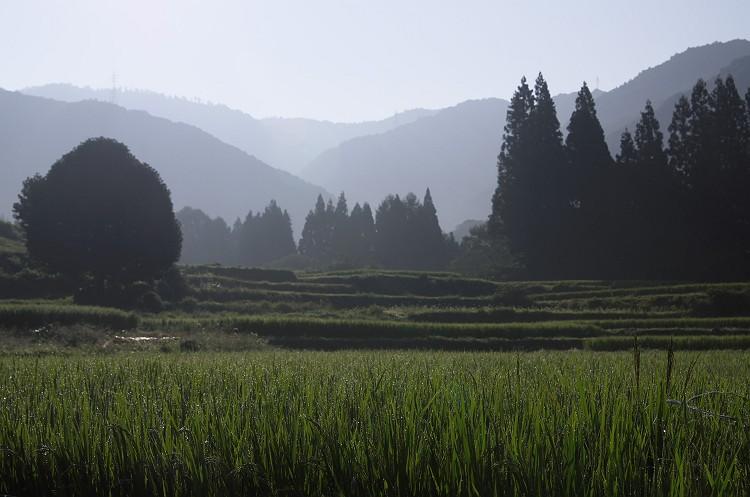 静寂の朝  ~青鬼の棚田 1~