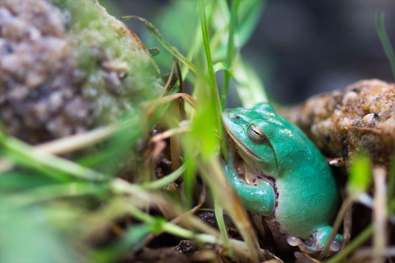 寝ているカエルがかわいい