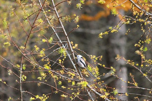 野鳥 052
