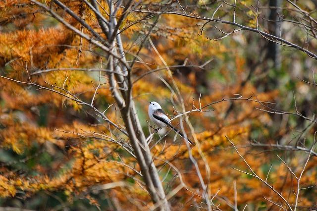 野鳥 047