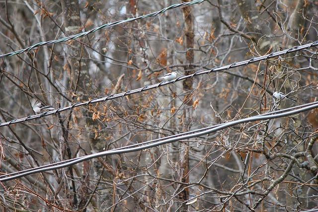 野鳥 023