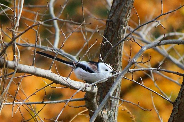 野鳥 043
