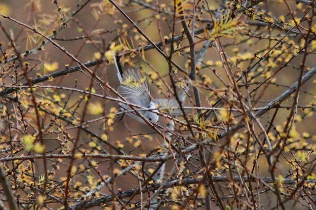 野鳥 033