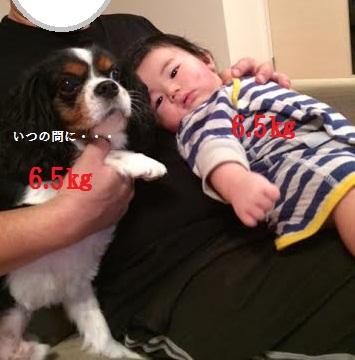 3_20141201214635e7f.jpeg