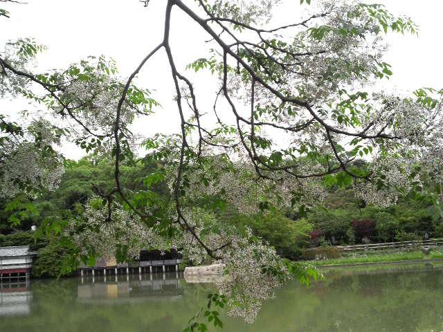 長岡天満宮 池の畔