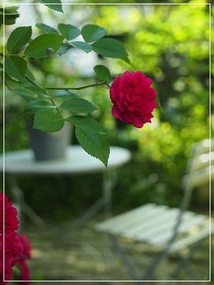 ルージュの薔薇