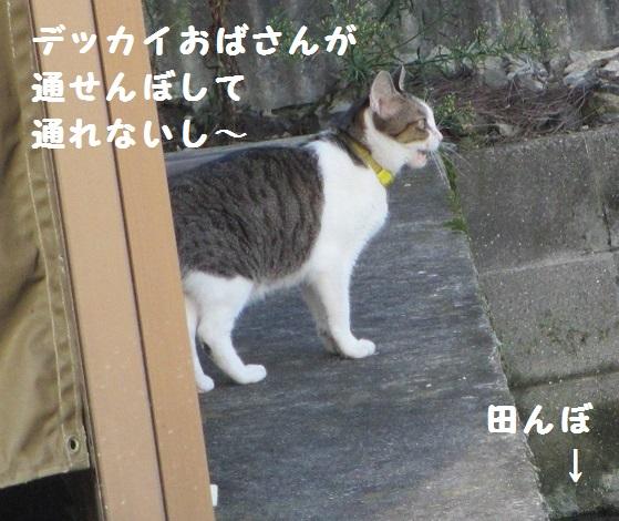 シマシマさん