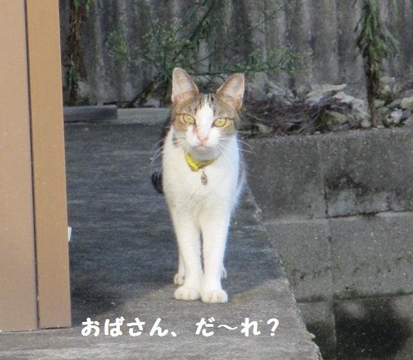 シマシマさん2
