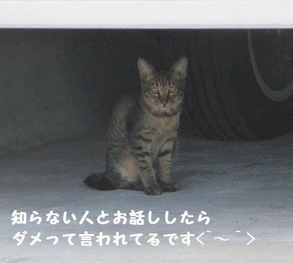 シマシマさん3