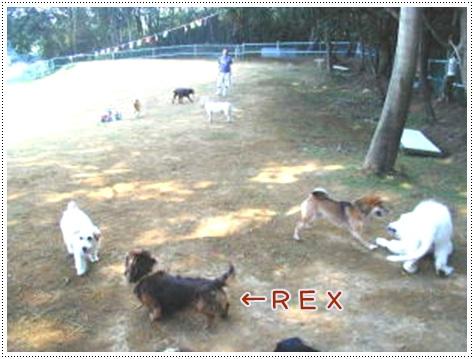 rex040728l_201410160846019cf.jpg