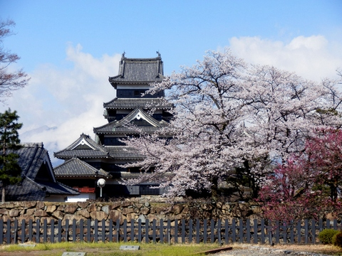 松本城桜 (27)