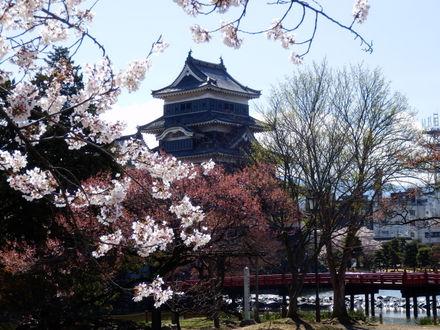 松本城桜 (69)