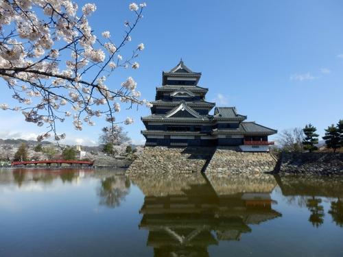 松本城桜 (35)