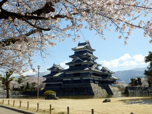 松本城桜(44)