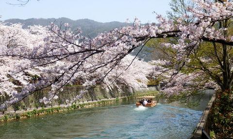 京都 (247)