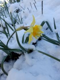 雪の日 (3)