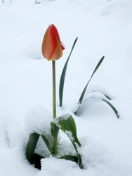 雪の朝 (4)